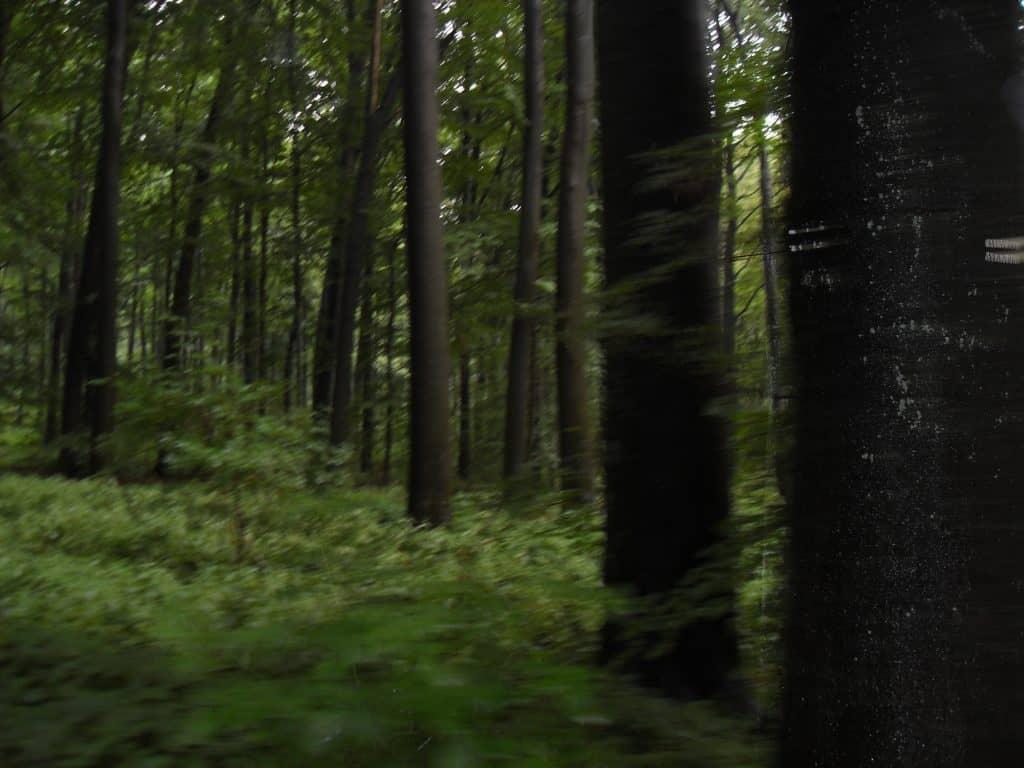 Wald entlang des Diemelradweges