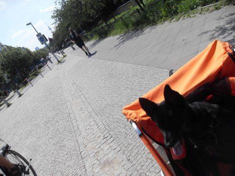 Radreise_mit_Hund_im_Fahrradanhaenger