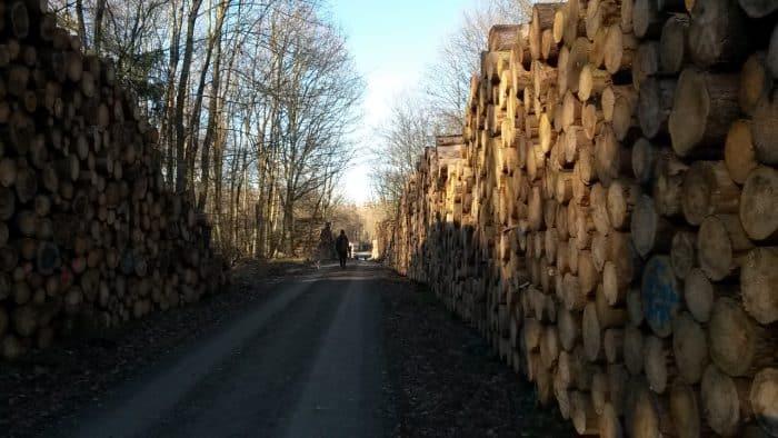 Harz_2020_grosse_Stapel_gefaellter_Fichten