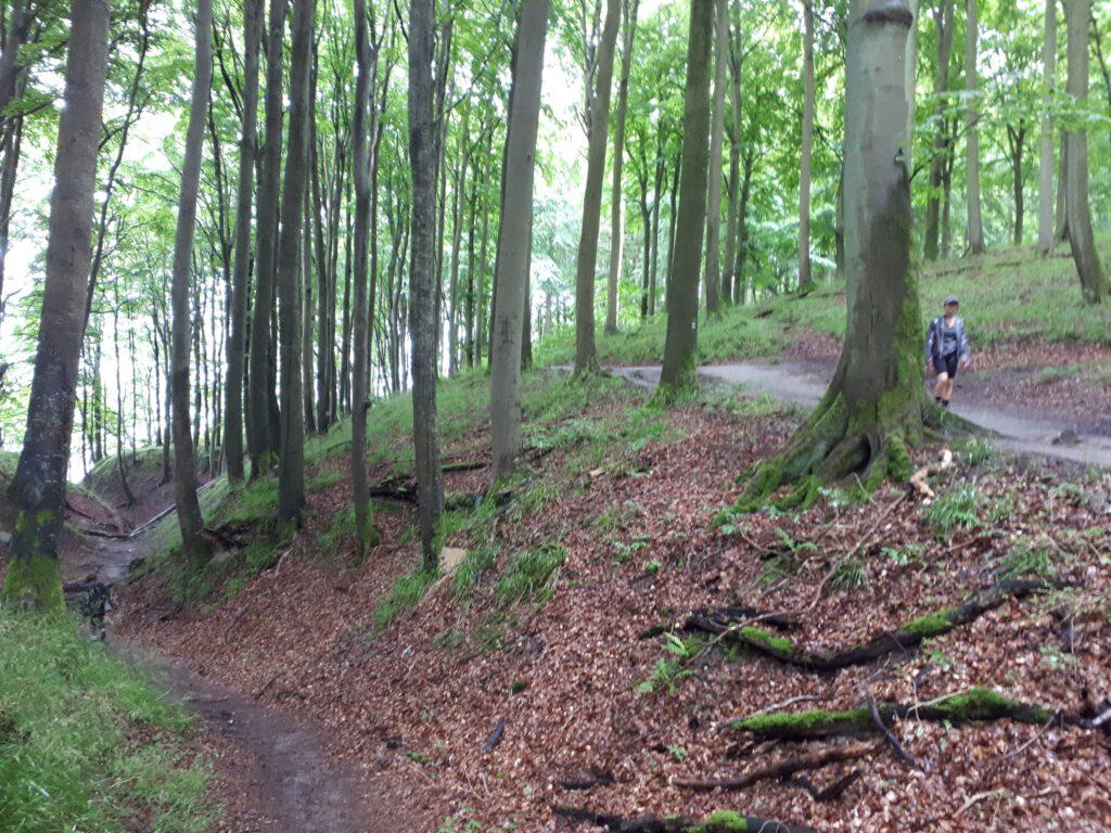 Nationalpark_Jasmund_Buchenwald